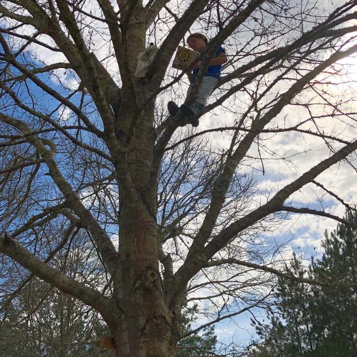 Maddie in tree pic